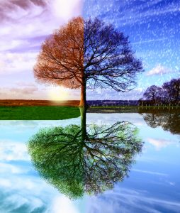 Renewable Term Life Insurance