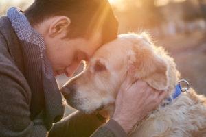 animal career for animal lovers